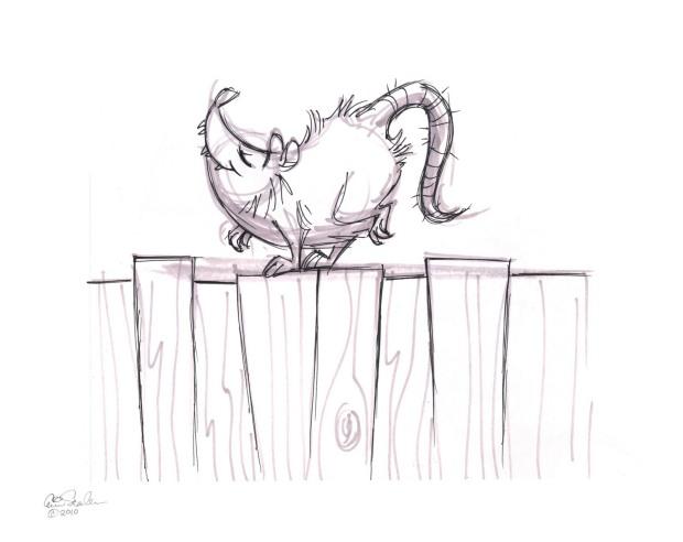 Possum on the fence