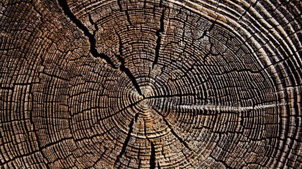 1681509-poster-1280-tree-human-mortality